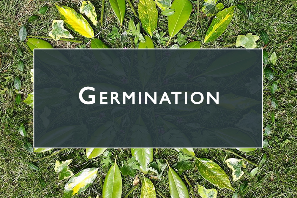 Germination Gallery