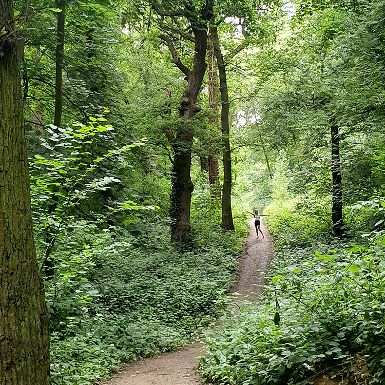 A person on a forest path surrounded by trees