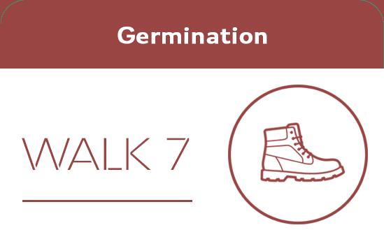 T1002021 Germination walk